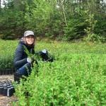 Mois de l'arbre et des forêts 2017 : planifiez une activité de distribution ou de plantation d'arbres