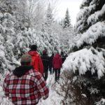 L'Aventure forêt et bois du 26 novembre
