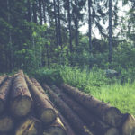Un outil pour connaître le prix du bois rond en forêt privée