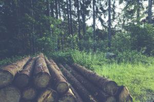 Norme FSC: rehausser les efforts en matière de durabilité des forêts