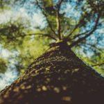 Les arbres en ville sauvent des vies!
