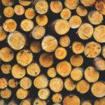 Le Québec redoute des négociations difficiles sur le bois d'œuvre