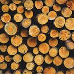 Négociations sur le bois d'œuvre – Première rencontre de la nouvelle table des partenaires