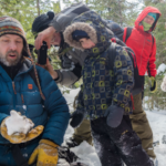 Savourer le sapin de la Forêt Montmorency