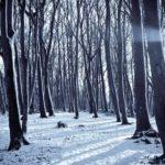 Identification des arbres et arbustes en saison hivernale