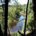 Plaidoyer pour la conservation des forêts anciennes