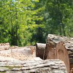 Forêt privée : Solide hausse de la production de bois en 2016
