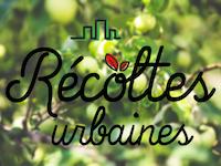 Avez-vous un arbre fruitier sur votre terrain?