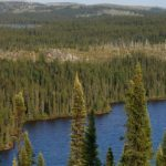 Gestion intégrée des ressources en milieu forestier