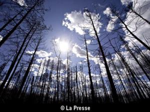 La perte des surfaces forestières atteint un niveau record