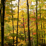 Pour un portrait juste de la forêt québécoise [communiqué du CIFQ]