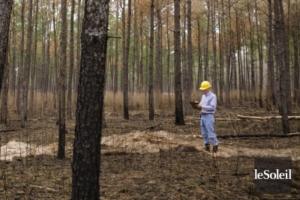 Un cours sur les valeurs autochtones pour les ingénieurs forestiers