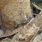 Recycl'Arbre – Valorisation du bois de frêne à Québec
