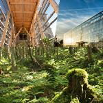 Nouveau bidiplôme à la maîtrise professionnelle en sciences forestières de l'Université Laval