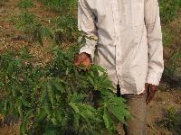 Nouveau microprogramme de 2e cycle en agroforesterie