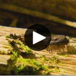 La semaine verte: le peuple du bois mort