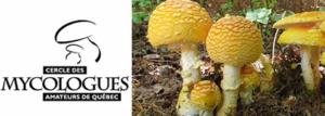 20e rencontre annuelle des mycologues du Québec