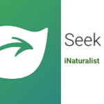 Seek: une application pour identifier une plante ou un animal