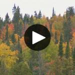 La semaine verte: Érablière mystère