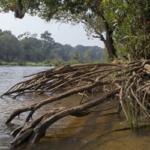 Nouvel outil d'aide à la décision pour l'adaptation écosystémique