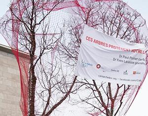 Arbres guérisseurs: une nouvelle installation qui souligne l'importance des arbres urbains pour la santé publique