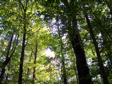 La forêt vous tient à coeur? Devenez membre de l'AF2R et profitez d'une foule d'avantages!