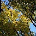 Visite à saveur forestière : Aménagement forestier en forêt privée