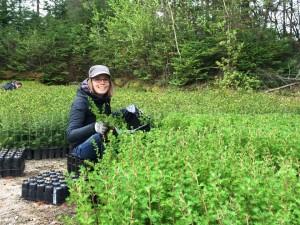 Plants d'arbres gratuits pour les écoles, organismes et municipalités – Mois de l'arbre et des forêts 2021