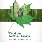 Rapport annuel – L'état des forêts au Canada 2019