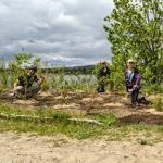Développement d'une trame verte pour le secteur de la Baie de Beauport – Résultats de la phase II