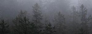 Webinaires du Service canadien des forêts – impacts des changements climatiques sur la forêt québécoise et outils d'adaptation
