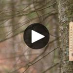 La semaine verte: la forêt du futur