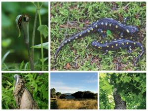 Suivi des ententes de conservation volontaire des milieux naturels d'intérêt de l'île d'Orléans – un bilan positif!