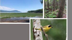 Phase II du projet de conservation volontaire à l'île d'Orléans – Bilan des années 1 et 2