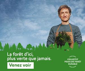 La forêt d'ici, plus verte que jamais!